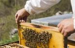 От 11 август животновъди и пчелари кандидатстват по de minimis