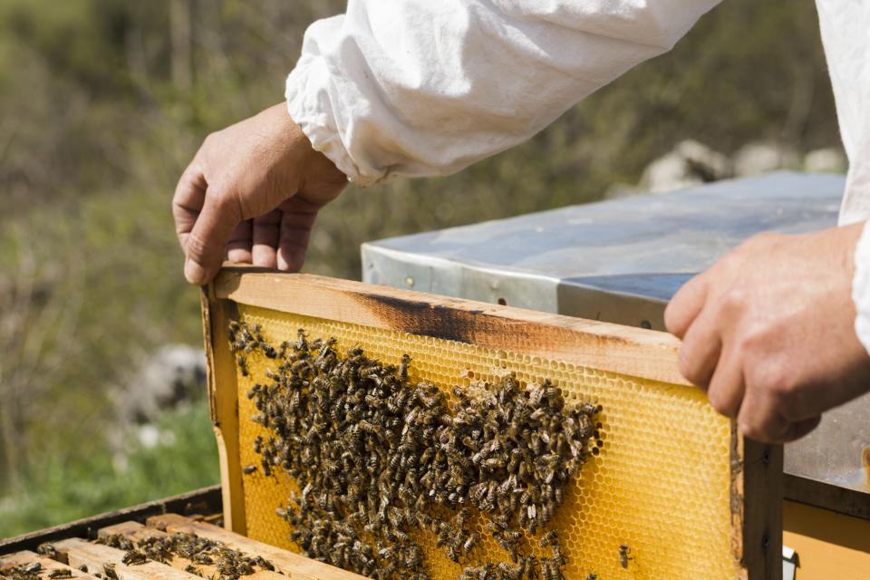 """Животновъдите и пчеларите могат да кандидатстват за финансово подпомагане по de minimis от 11 до 24 август 2020 г. в областните дирекции на ДФ """"Земеделие"""". Предвиденият..."""
