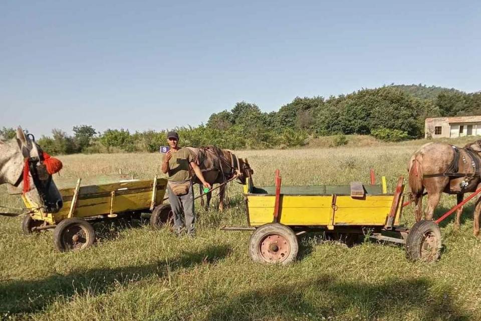 Днес в с. Ботево беше извършена регистрация и преглед на пътните превозни средства с животинска тяга. Регистрирани са общо 21 каруци, с което регистрираните...