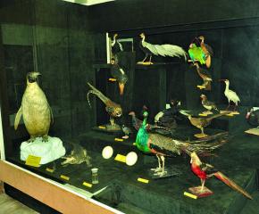 150 нови експонати очакват в Природонаучния музей в Котел