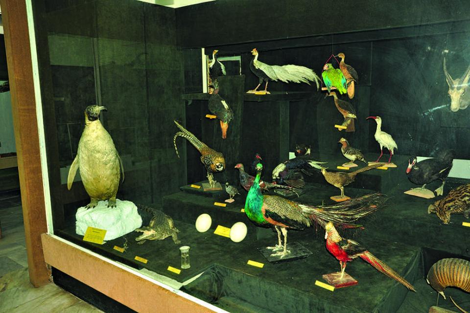 Дарение от 150 експоната ще обогати експозицията в Природонаучния музей в Котел. Това съобщи пред репортер на БТА директорът на културната институция Захари...