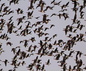 На 3-ти и 4-ти октомври честваме европейските дни на птиците