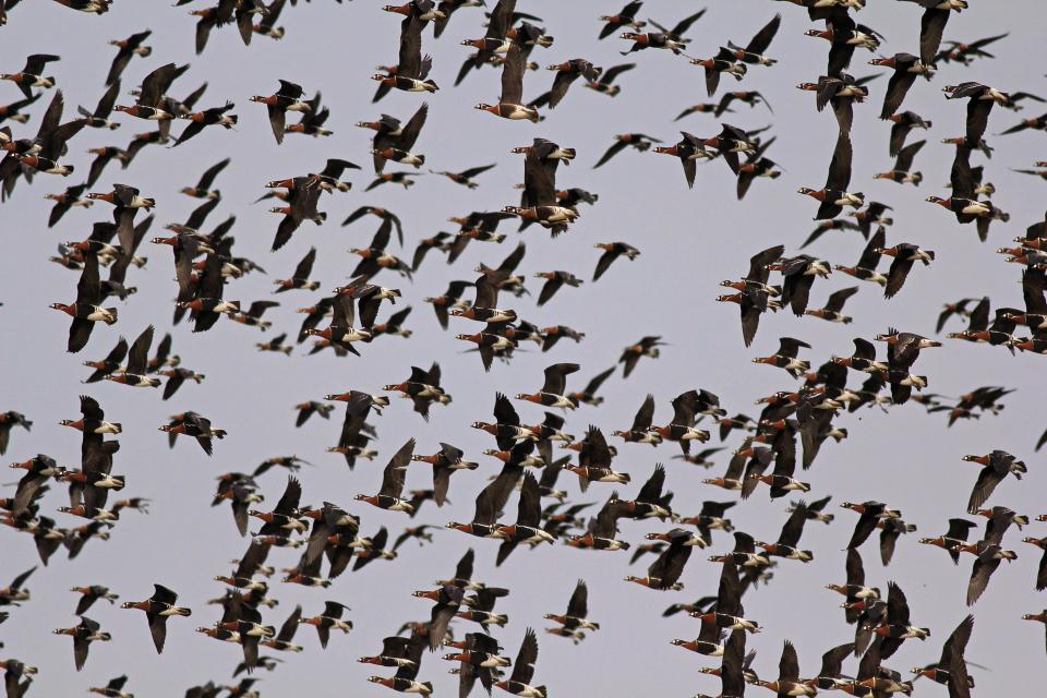 За 27-ти пореден път BirdLife International кани хората от Европа, Близкия Изток и Централна Азия да се насладят на чудото на миграцията на птиците. Това...