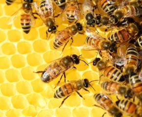 500 пчелари и фермери вече са с регистрация в платформата за пестициди