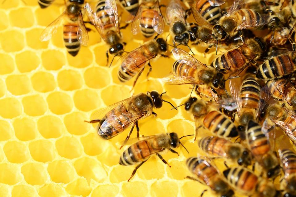 Общо 500 потребители – 300 пчелари и 200 земеделски стопани, са се регистрирали до момента вЕлектронната платформа за оповестяване на растителнозащитните,...