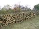 57 лв. за кубик общински дърва за огрев предлагат в Стралджа