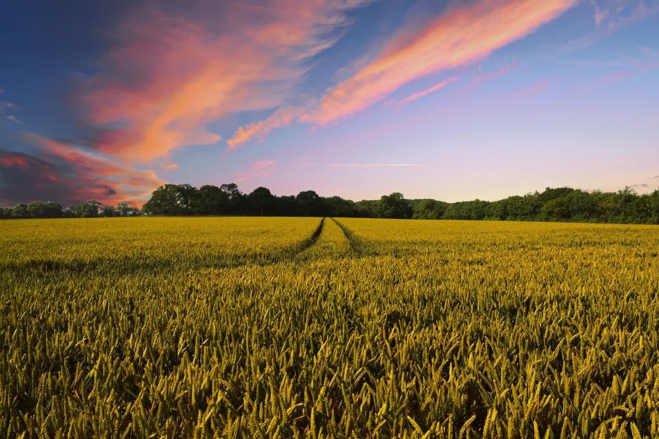 700 млн. лв. ще постъпят по сметките на българските земеделци днес по схемата за директни плащания на площ. Това е най-голямото плащане към фермерите...