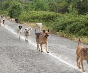 Акция срещу бездомни кучета започва в Болярово