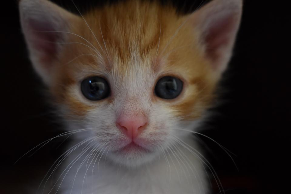 """Безотговорни и безчовечни, така определи Явор Гечев от фондация """"Четири лапи"""" хората, които изоставят домашни животни. Той обясни, че хората, го правят..."""