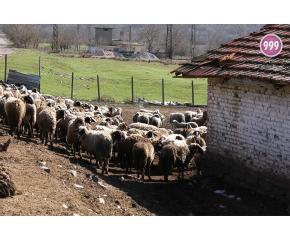 БАБХ иска ново разглеждане на решението на ВАС за фермата на Ана Петрова в Болярово (ВИДЕО)