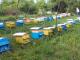 БАБХ: Няма доказателства, че подморът на пчелите е свързан с третирането на посеви