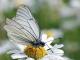Беше извършено пръскане срещу бяла американска пеперуда и комари в Ямбол