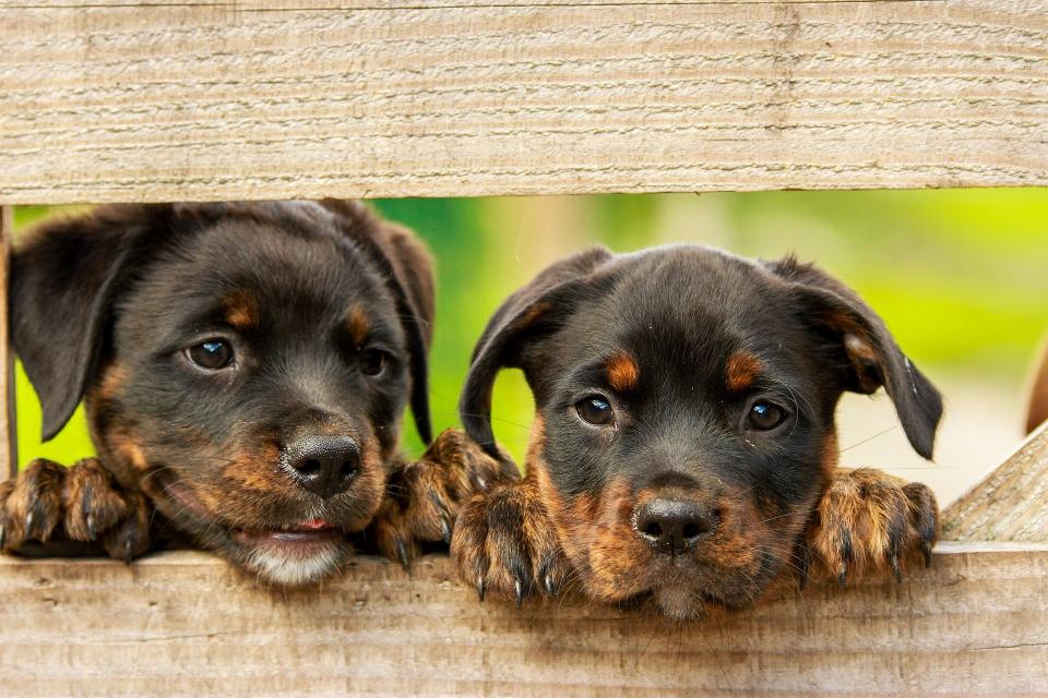 Кампания за безплатна кастрация на домашни кучета стартира в Перник. Всеки месец ще бъдат обявявани две дати за извършване на манипулациите. Първите две...