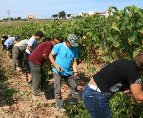 Безработните няма да губят право на помощи, ако се трудят като сезонни работници
