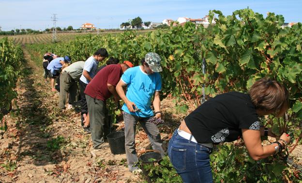 Безработните, решили да работят в селското стопанство, няма да губят правото си на социални помощи. Правилата, по които ще се наемат сезонни работници,...