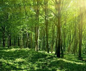 Близо 1000 декара гори ще бъдат залесени в Североизтока