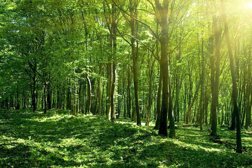 Близо 1000 декара нови гори ще бъдат залесени през тази година на територията на Североизточното държавно предприятие. От тях 244,5 декара са в област...
