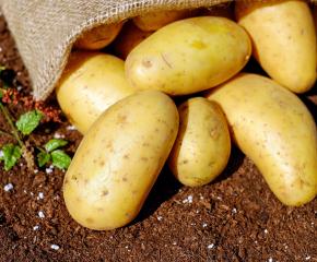 Близо 2 милиона лева подпомагане ще получат картофопроизводителите