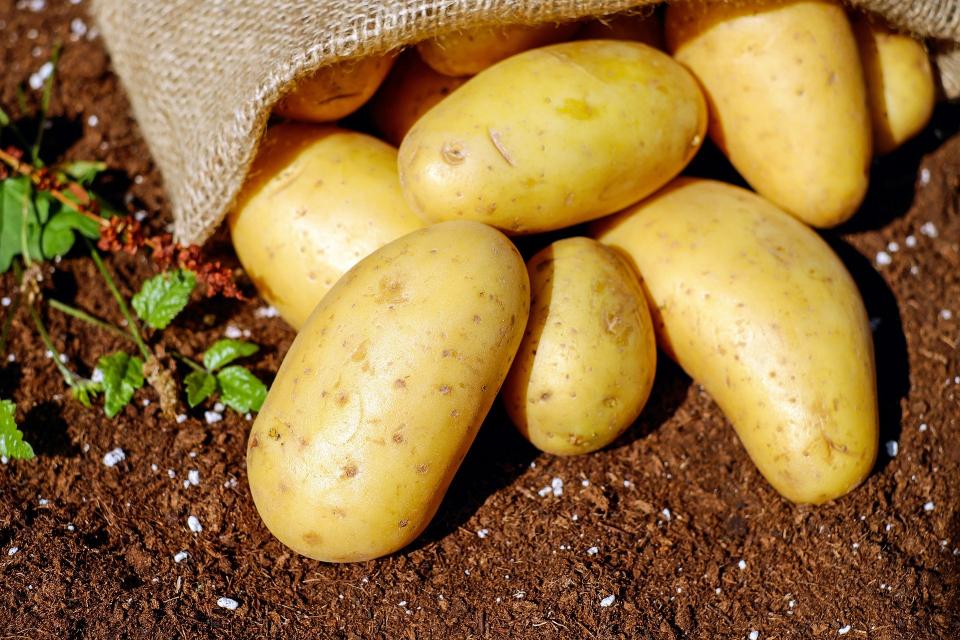 """Производителите на картофи у нас ще получат близо 2 млн. лв. финансово подпомагане от държавата, съобщават от Държавен фонд """"Земеделие"""". Парите са за борба..."""