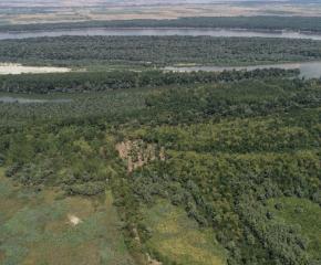 """Близо 50 000 фиданки са засадени в резервата """"Сребърна"""" в последните 32 месеца"""