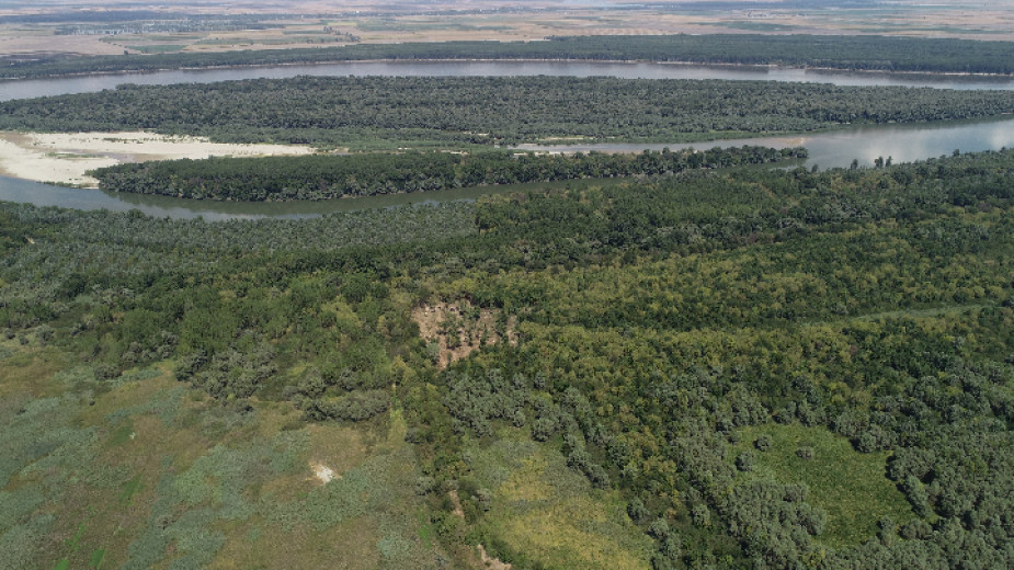 Над 46 000 броя фиданки от местни растителни видове са залесени в границите на поддържан резерват Сребърна край Силистра през последние 32 месеца, съобщават...
