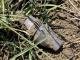 Част от снаряд намерен в нива до Стралджа
