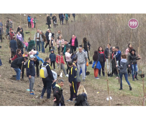 В Деня на жената младежи засадиха 100 дръвчета в Ямбол (видео)