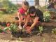 "Деца засадиха цветя в дворовете на детски градини в община ""Тунджа"""