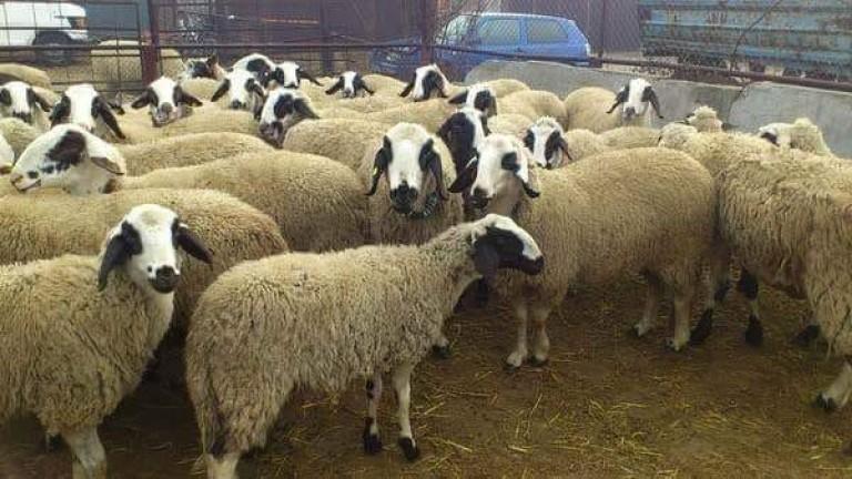 """Днес е последният срок, в който фермерите могат да подават документи по схемата """"Де минимис"""" за отглеждане на животните си, съобщават от БНР. Одобреният..."""