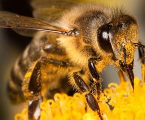 До 31 януари е срокът пчеларите да се регистрират в електронната платформа за пръскания