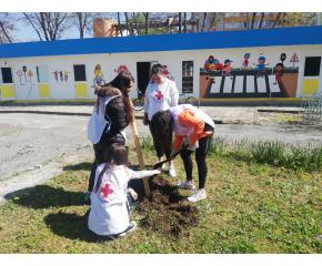Доброволци на БМЧК засадиха дръвчета по повод Деня на Земята