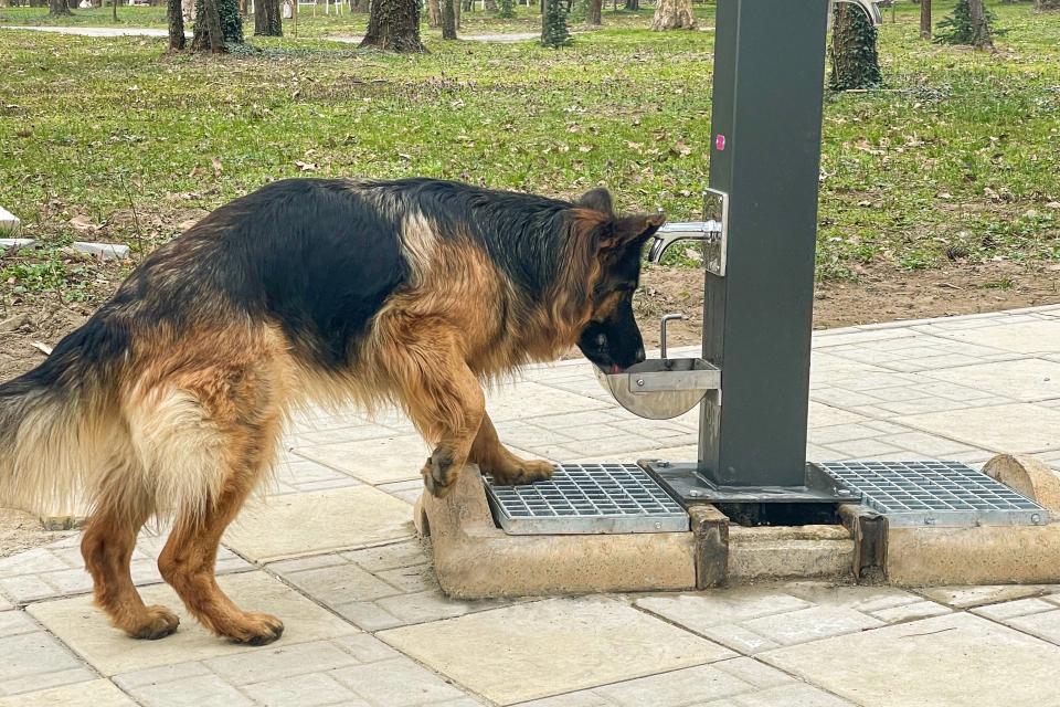 Четириногите в Ямбол имат вече свои чешмички. Едната е монтирана в зоната за разходки на домашни любимци в Градския парк, а втората предстои да бъде поставена...