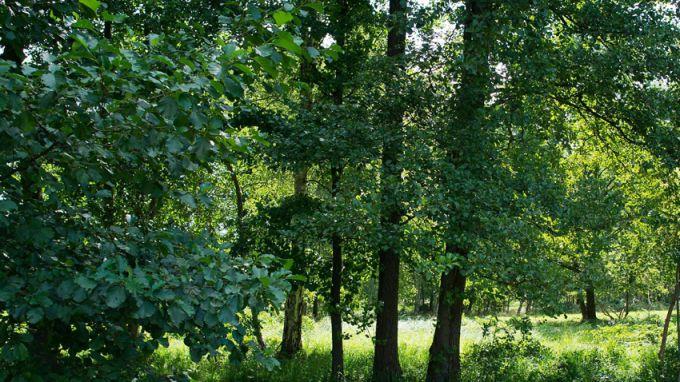 """""""Целта е да се подобри организацията по управление, стопанисване и опазване на маломерните частни горски имоти"""". Това каза Елена Величкова, експерт в Министерството..."""
