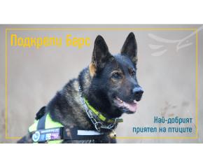 Единственият екип с обучено куче за борба с отровите в България има нужда от подкрепа