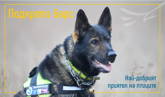 Днес, на Международния ден на доброволеца, Българското дружество за защита на птиците (БДЗП) стартира кампания за набиране на средства за единствения в...