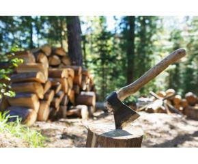 Една трета от дърводобива у нас е незаконен
