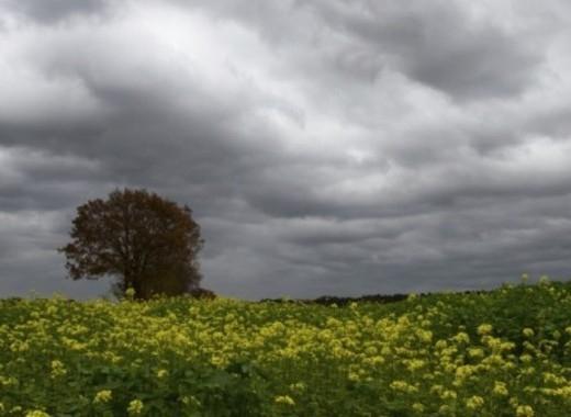 Днес ще бъде предимно облачно с валежи от дъжд, главно в Южна България.Ще духа слаб до умерен източен вятър. Максималните температури в Южна България ще...