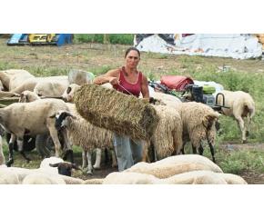 Фермата на Ана Петрова отново е вписана в регистрите