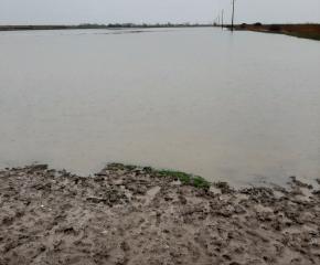 Фермерите, чиито ниви са наводнени, могат да получат обезщетение