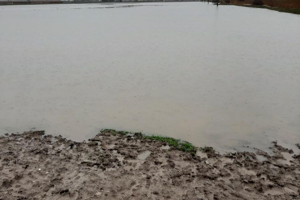 Регистрираните земеделски производители, чиито площи са пострадали от проливните дъждове (включително от преливане на язовири, скъсани диги и други подобни),...