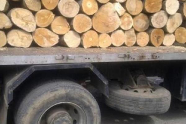 Горски служители на Регионална дирекция по горите Сливен задържаха товарен камион с незаконна дървесина. Нарушението е констатирано при извършена вчера...