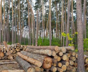 Горски служители затвориха обект за съхранение и търговия с дървесина