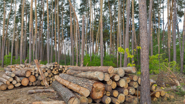 Служители на Изпълнителна агенция по горите и Регионална дирекция по горите (РДГ) –Сливен са констатирали незаконна дървесина в обект за съхранение и търговия...