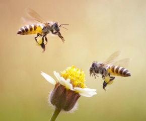 Готовност за протест обявиха българските пчелари