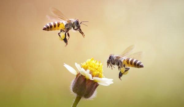 """Готовност за национален протест заявиха представители на Националния браншови пчеларски съюз и Сдружение """"Български свободни пчелари"""", съобщават от БНР. На..."""