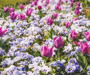 Хиляди именици празнуват на Цветница в Ямбол