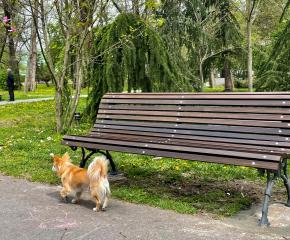 Инициатива на Община Ямбол  за подмяна на старите пейки в Градския парк