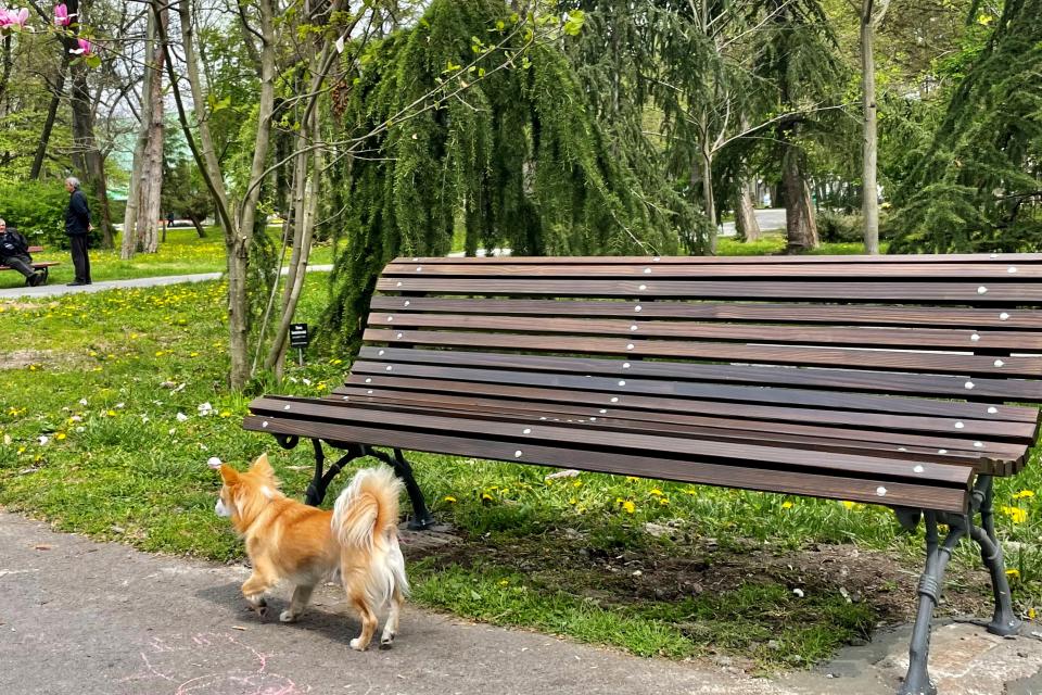 Община Ямбол започва нова инициатива за подмяна на старите пейки след преасфалтирането на основни алеи с увредена настилка в Градския парк. Преди две...