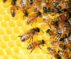 Интересът на пчеларите към платформата за предупреждение за използване на пестициди е слаб