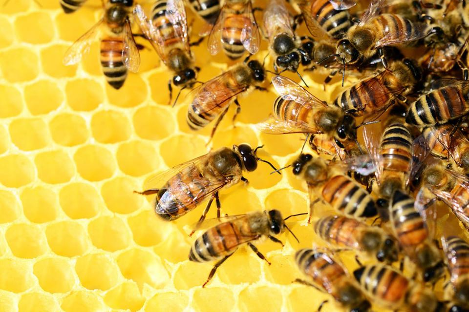 По-малко от една четвърт от пчеларите у нас са се регистрирали велектронната платформа, която трябва да служи за обмен на информация за пръскането на...